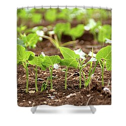 New Sprouts In The Promised Land Shower Curtain by Yoel Koskas