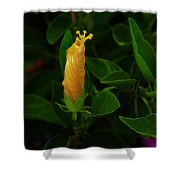 Shower Curtain featuring the photograph Get Ready - I'm Coming Out by Craig Wood
