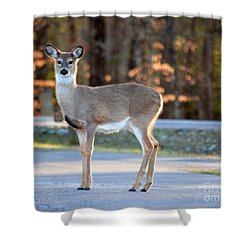 Getting Ready For Winter Shower Curtain by Brenda Bostic