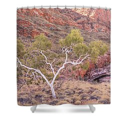 Ghost Gum Shower Curtain by Racheal  Christian