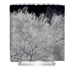 Ghost Of A Tree Shower Curtain