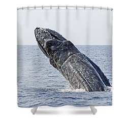 Giant Breach Shower Curtain by Shoal Hollingsworth