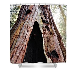 Giant Forest Giant Sequoia Shower Curtain