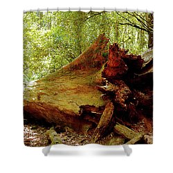 Giant Has Lived Its Life Shower Curtain