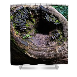 Giant Knot In Tree Shower Curtain by Scott Lyons