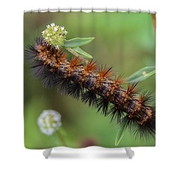 Giant Leopard Moth Caterpillar Shower Curtain