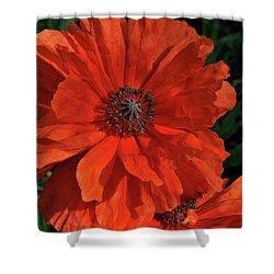Giant Mountain Poppy Shower Curtain