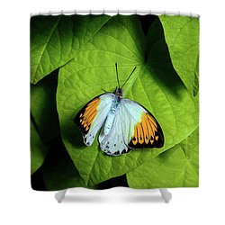 Shower Curtain featuring the photograph Giant Orange Tip Butterfly by Tom Mc Nemar