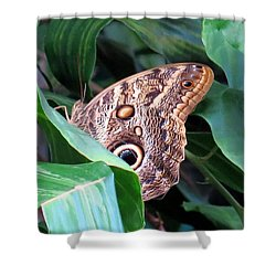 Giant Owl Butterfly Shower Curtain by Betty Buller Whitehead