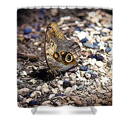 Giant Owl Shower Curtain