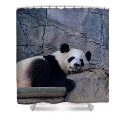 Giant Panda Shower Curtain by Donna Brown