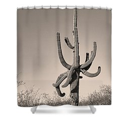 Giant Saguaro Cactus Sepia Image Shower Curtain by James BO  Insogna