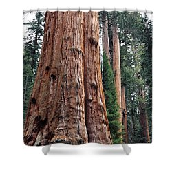 Shower Curtain featuring the photograph Giant Sequoia II by Kyle Hanson