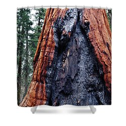Shower Curtain featuring the photograph Giant Sequoia by Kyle Hanson