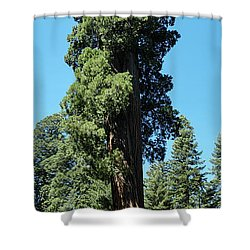 Giant Sequoia, Sequoia Np, Ca Shower Curtain