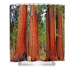 Giant Sequoias Shower Curtain by Dennis Cox