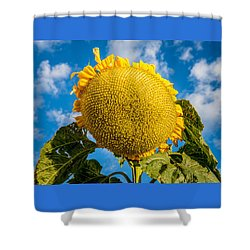 Giant Sunflower Against A Blue Sky With Clouds. Shower Curtain