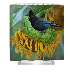 Giant Sunflower With Jay Shower Curtain