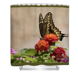 Giant Swallowtail II Shower Curtain by Anne Rodkin