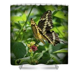 Giant Swallowtail On Lantana Shower Curtain