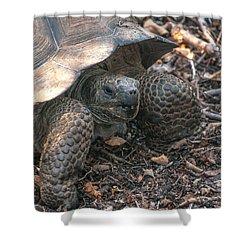 Giant Tortoise At Urbina Bay On Isabela Island  Galapagos Islands Shower Curtain