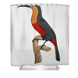 Giant Touraco Shower Curtain