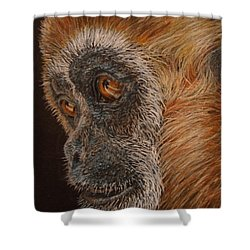 Gibbon Shower Curtain by Karen Ilari