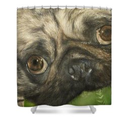 Shower Curtain featuring the painting Gidget by Cherise Foster