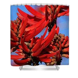 Gift Of Zimbabwe Shower Curtain by Linda Shafer