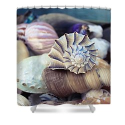Gifts From The Sea Shower Curtain