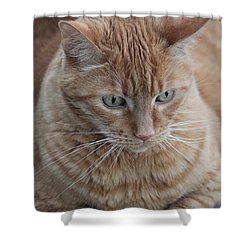 Ginger Cat Shower Curtain