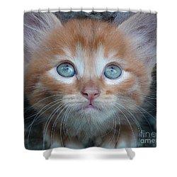 Ginger Kitten With Blue Eyes Shower Curtain by Sergey Lukashin