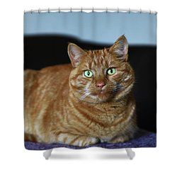 Shower Curtain featuring the photograph Ginger Marmalade Cat by Nareeta Martin