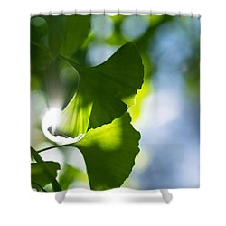 Gingko Leaves In The Sun Shower Curtain