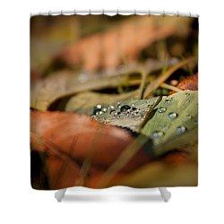 Ginkgo   Shower Curtain by Bulik Elena