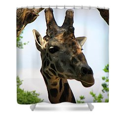 Shower Curtain featuring the photograph Giraffe by Beth Vincent