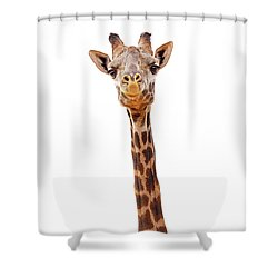 Giraffe Closeup Isolated - Happy Expression Shower Curtain