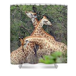 Giraffe Flirting Shower Curtain