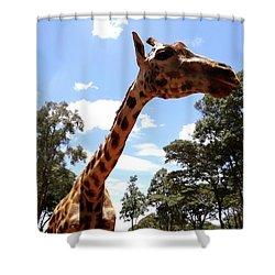 Giraffe Getting Personal 3 Shower Curtain