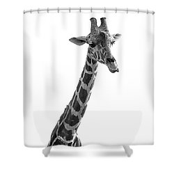Shower Curtain featuring the photograph Giraffe In Black And White 3 by James Sage