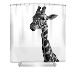 Shower Curtain featuring the photograph Giraffe In Black And White by James Sage