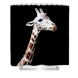 Giraffe Shower Curtain by Lauren Mancke