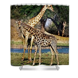 Giraffe Mother And Calf Shower Curtain