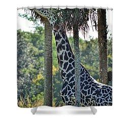 Giraffe Shower Curtain by Nikki McInnes