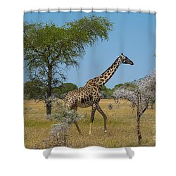 Giraffe On The Move Shower Curtain by Pravine Chester