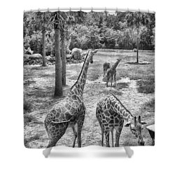 Shower Curtain featuring the photograph Giraffe Reticulated by Howard Salmon