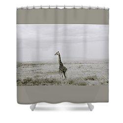 Giraffe Shower Curtain by Shaun Higson