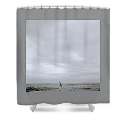 Giraffe Under Big Sky Shower Curtain by Shaun Higson