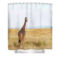 Giraffe Walking In Kenya Africa - Vertical Shower Curtain