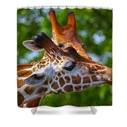 Giraffes Shower Curtain